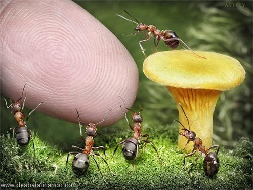 formigas inacreditaveis incriveis desbaratinando  (6)