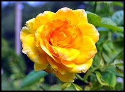 04f3 - Flowers in the Rose Garden