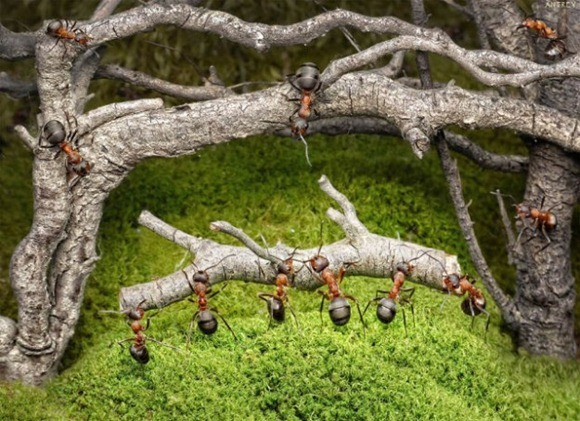 Life-of-Ants-Andrey-Pavlov-13
