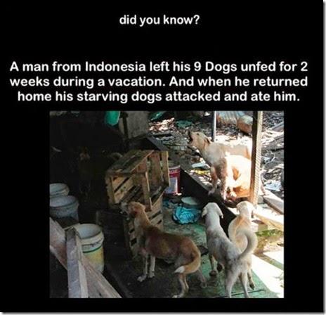 random-facts-interesting-031