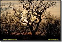 RSPB Otmoor
