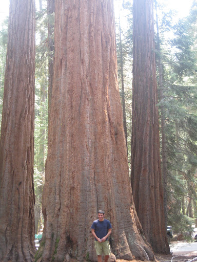 nimmi and the big Sakoya tree in Yosemite Park,California