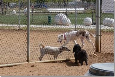 Dog Park Prescott Valley (Skruffy)