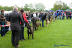 20100513-Bullmastiff-Clubmatch_31163.jpg