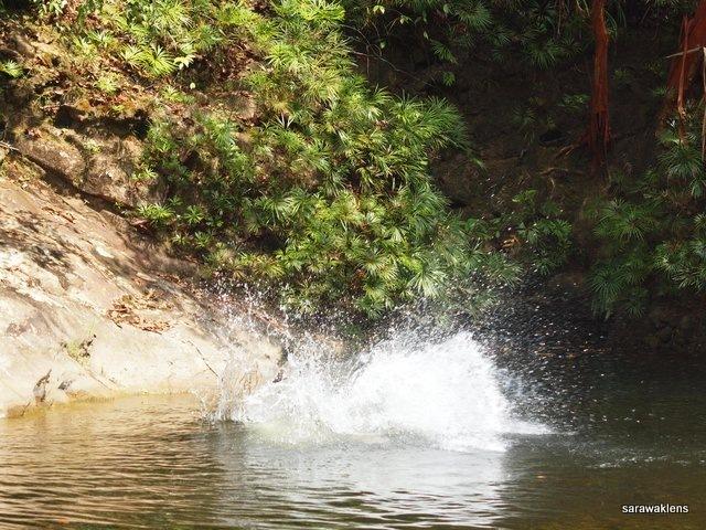 river_in_sarawak_17