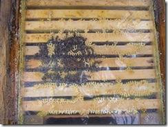 21,1,2012 včelky zimovaní 028