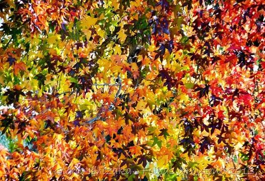 9  Glória Ishizaka - Folhas de Outono 2013