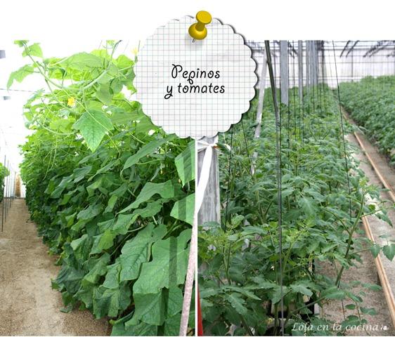 Pepinos-y-tomates