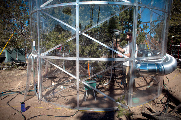 TREE LAB: An outdoor experiment in New Mexico, where 63 pinyon and juniper trees are being monitored intensely. Mark Holm for The New York Times