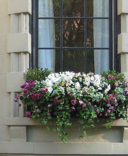 Lovely Windowbox