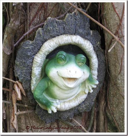 12-01-happy-frog