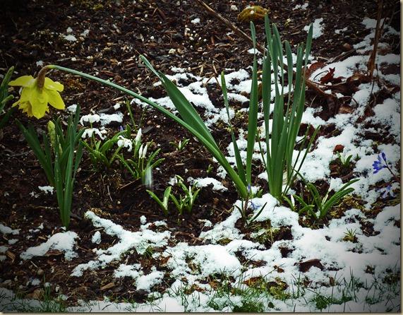 Snow - Spring 2013 - 2lomo