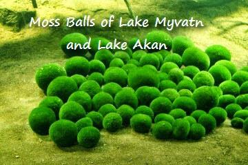 moss-balls