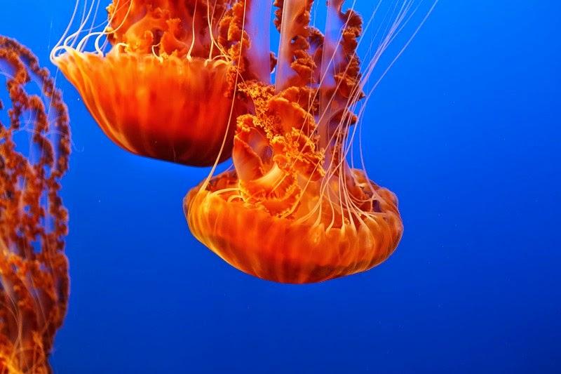 aquarium-13