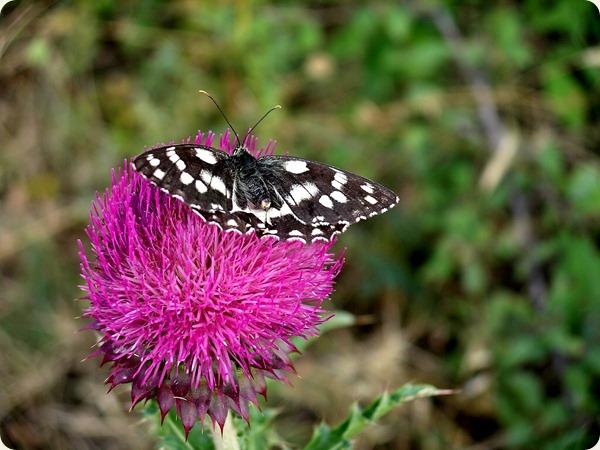 basilicata fiore2