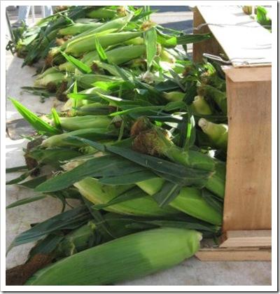 Copy of corn