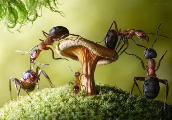 Life-of-Ants-Andrey-Pavlov-14