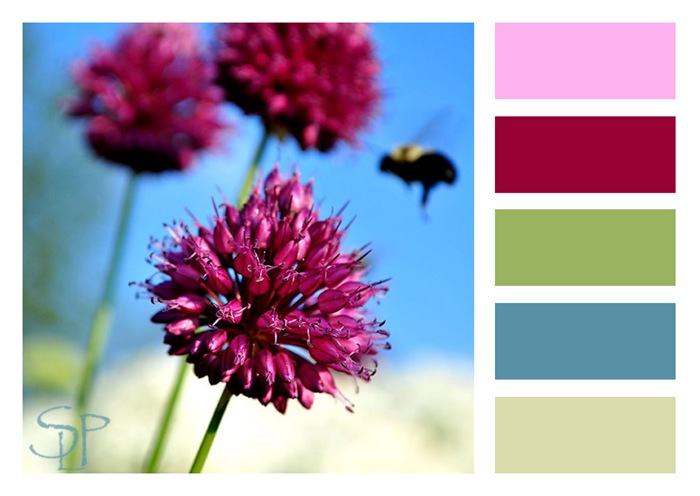 allium and bee-color blocks