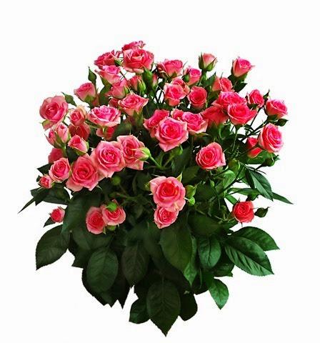 arranjo de rosas