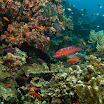 Great Barrier Reef Australia www.reefencounter.com.au.jpg