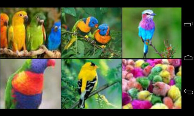 [birds%255B3%255D.png]