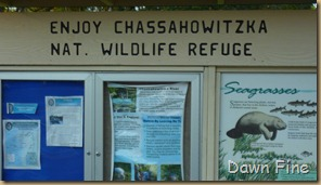 Chassahowitzka  River_038