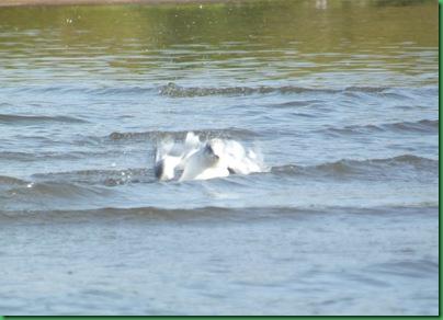 Illinois River Kayak #2 Wednesday 020A