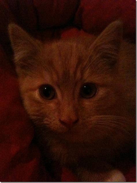 2011_12 Garfield (7)