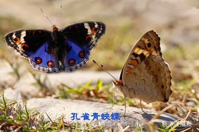 b_MG_7637