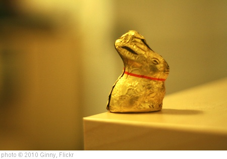 'Chocolate Bunny' photo (c) 2010, Ginny - license: http://creativecommons.org/licenses/by-sa/2.0/
