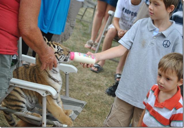 Tiger Zoo 032
