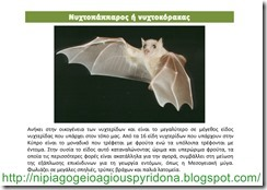 τα ζώα της Κύπρου(3)