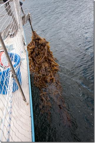 kelp monster