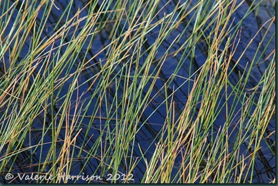 45-abstract-reeds