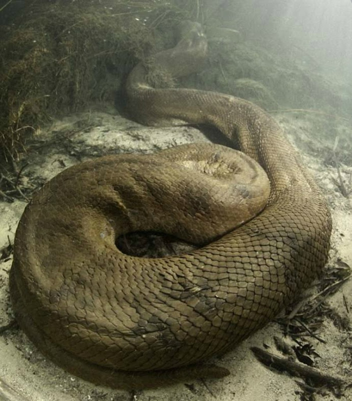 Anaconda_05