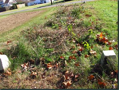 garden cleared1118 (2)