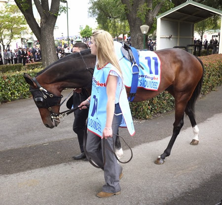 cox plate_dundeel 1