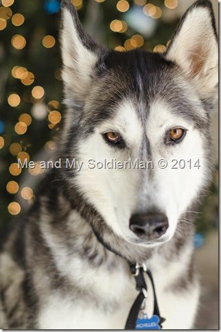 Me and My SoldierMan Husky Achilles Christmas