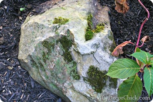 growing moss on rocks