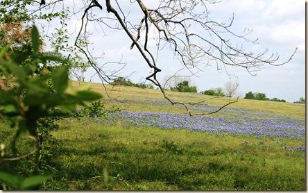 blue dusted hillside