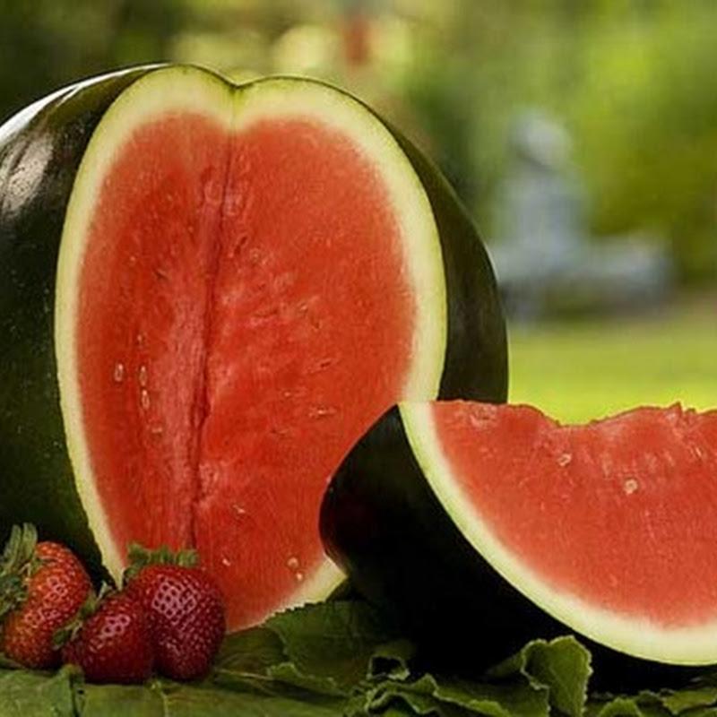 Fakta Kandungan Nutrisi Semangka
