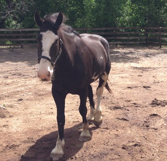 Jasper;Horses;Dark River Farm 113