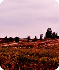 fall_wine_country