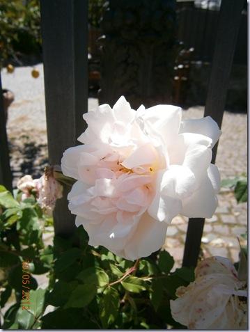 Il giardino delle rose furighedda gardening - Il giardino delle rose ...