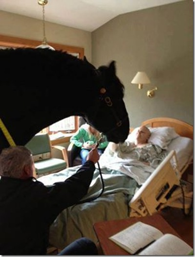 Congratulations to the Madison Mounted Police for being such caring horse lovers the hospitalized policeman whose horse paid him that hospital visit