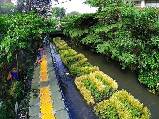Plantas Rio Pasig 03