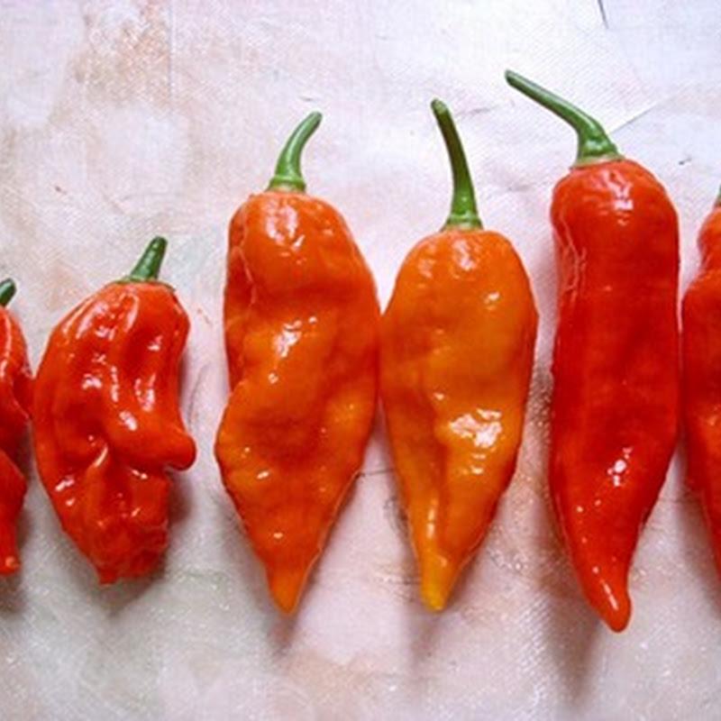 Desafio de comer pimenta pode ser perigoso.