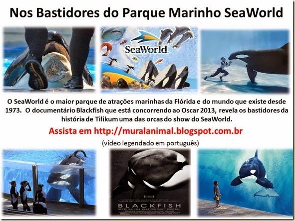 Nos Bastidores do Parque Marinho SeaWorld
