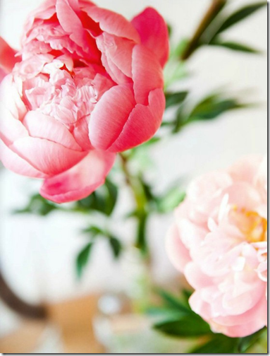 peony via prettystuff.tumblr