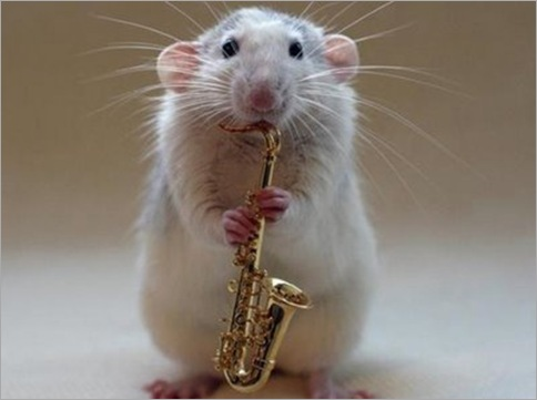 multi-talented mouse